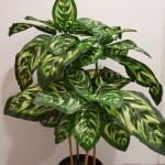 Leafy Plants $49