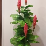 Flowering Trees Approx. $59- $99