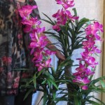 Flowering Tress Approx. $59 - $99
