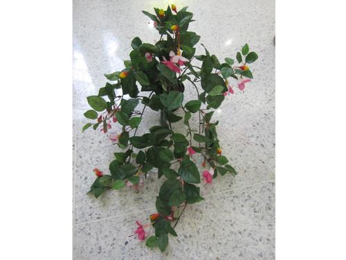 Flowering Vines range $22- $32